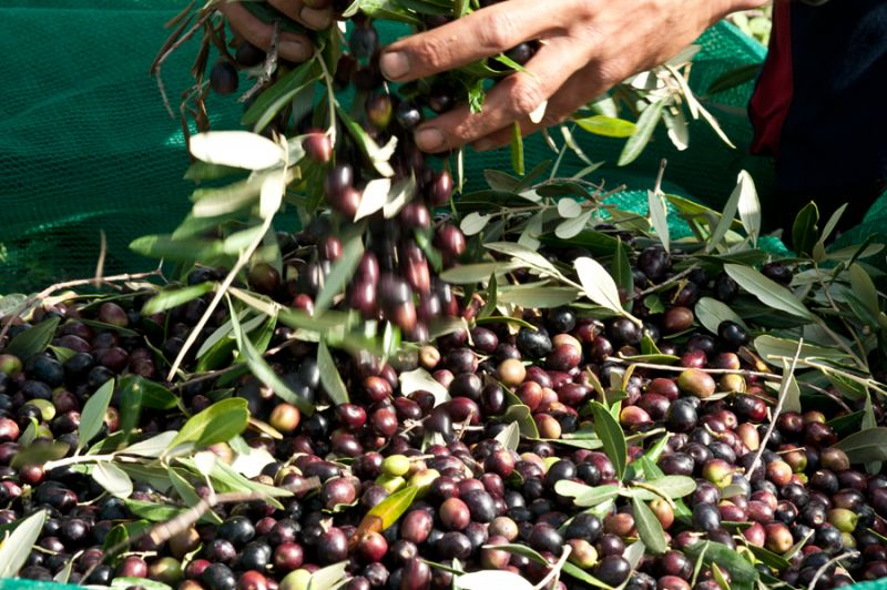 Come conservare l'olio extra vergine d'oliva